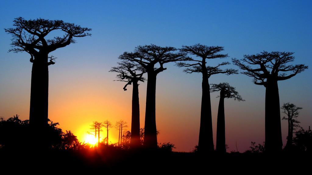 avenue baobabs madagascar